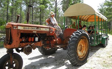 Florida Agricultural Museum tractor pulled hayride