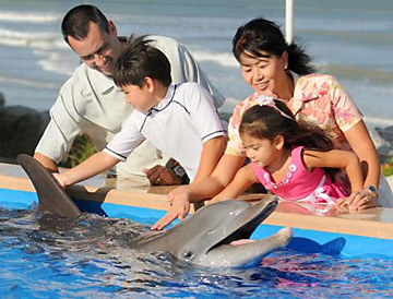 Marineland Dolphin Adventure family petting a dolphin