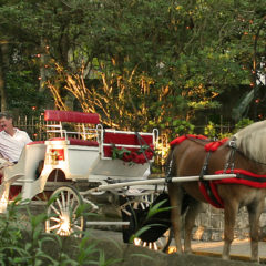 Horse Buggy passing St. Francis Inn