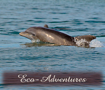 click for details on Eco-Adventures