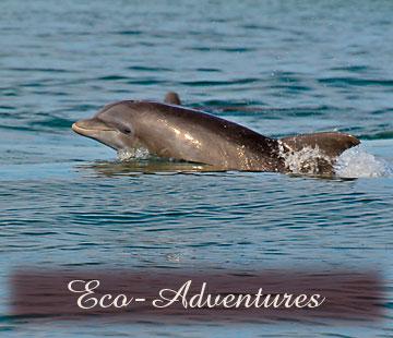 Eco-Adventures