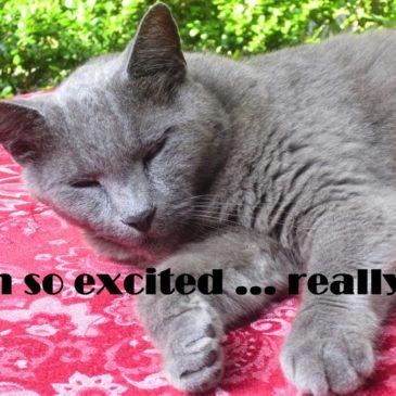 Inn cat sleeping