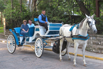 Wedding Carriage with celebrating couple